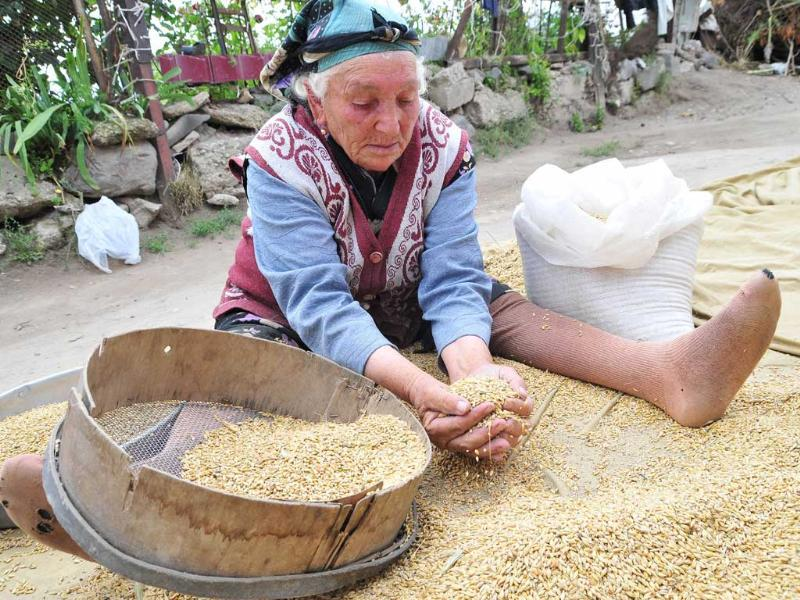 An Armenian woman sifts grain in her yard in Vardadzor. In the midst of the harvest season in Vardadzor, around 130 kms (80 miles) from the ex-Soviet state's capital Yerevan, women do the hard agricultural labour, prepare for the long winter ahead and raise their children practically without male assistance.