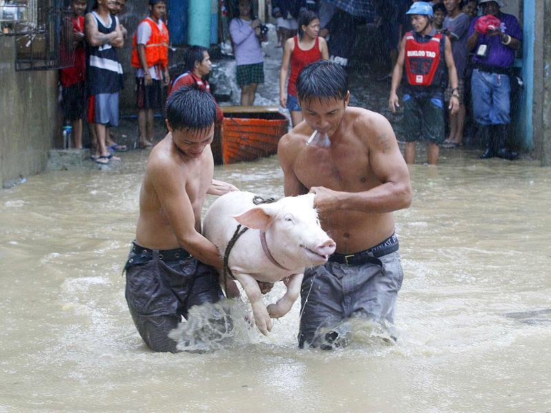 Residents carry a pig as they wade knee-deep in floodwaters brought on by Typhoon Nesat, locally known as Pedring, in San Mateo Rizal east of Manila.