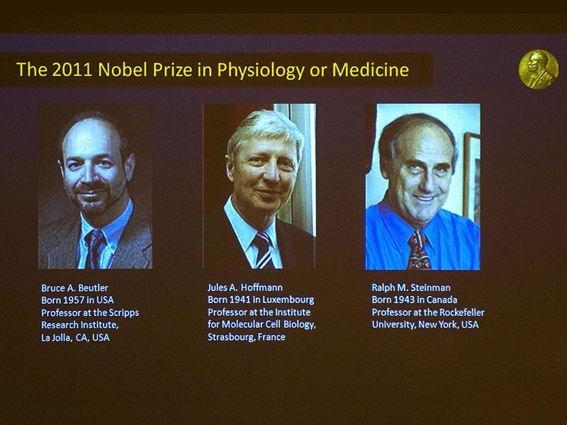 A picture shows a television screen at the Nobel Assembly at the Karolinska Institute in Stockholm announcing that (L-R) Bruce Beutler of the US, Jules Hoffmann of Luxembourg and Canada's Ralph Steinman had won the 2011 Nobel Prize in Physiology or Medicine for their discoveries concerning the activation of innate immunity and that Ralph M. Steinman of Canada had won for his discovery of the dendritic cell and its role in adaptive immunity.