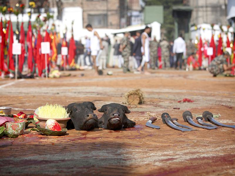 Sliced heads of water buffalos are seen lying on the ground after being sacrificed during the Dasain festival in Kathmandu. Hindus in Nepal sacrificed animals during the festival as part of celebrations held throughout the country, worshipping Goddess Durga and celebrating the victory over evil.