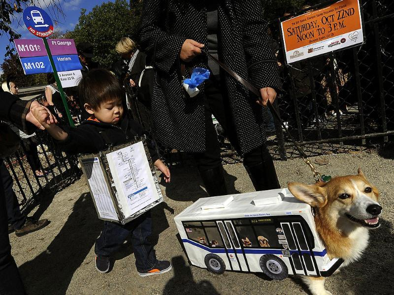 A dog as a NYC bus during the 21st Annual Tompkins Square Halloween Dog Parade in New York. (AFP Photo)