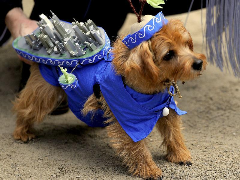 A dog participates in the 21st Annual Tompkins Square Halloween Dog Parade in New York. (AFP Photo)