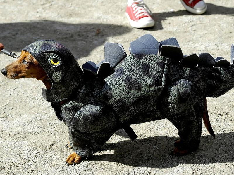 A dog as a dragon during the 21st Annual Tompkins Square Halloween Dog Parade in New York. (AFP Photo)
