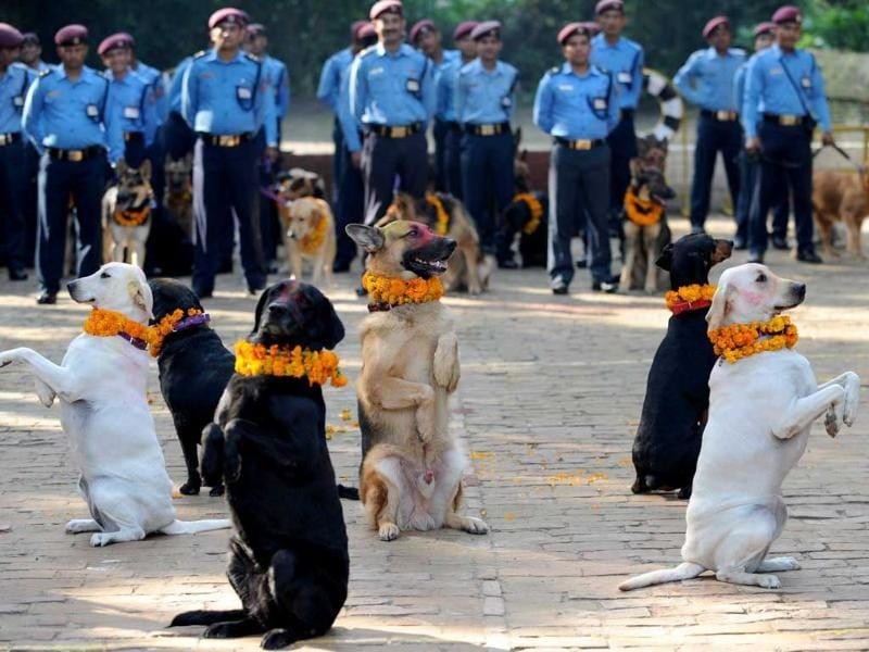 Nepalese policemen pose with their dogs after applying vermillion to their foreheads and placing marigold garlands around their necks on Tihar festival in Kathmandu.