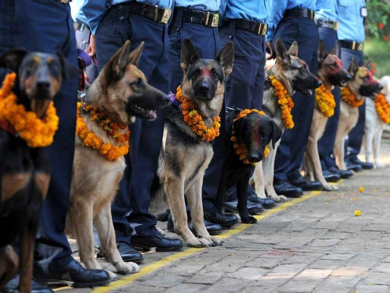 Nepalese policemen pose with their dogs after applying vermillion to their foreheads and placing marigold garlands around their necks on the occasion of the Tihar festival in Kathmandu.