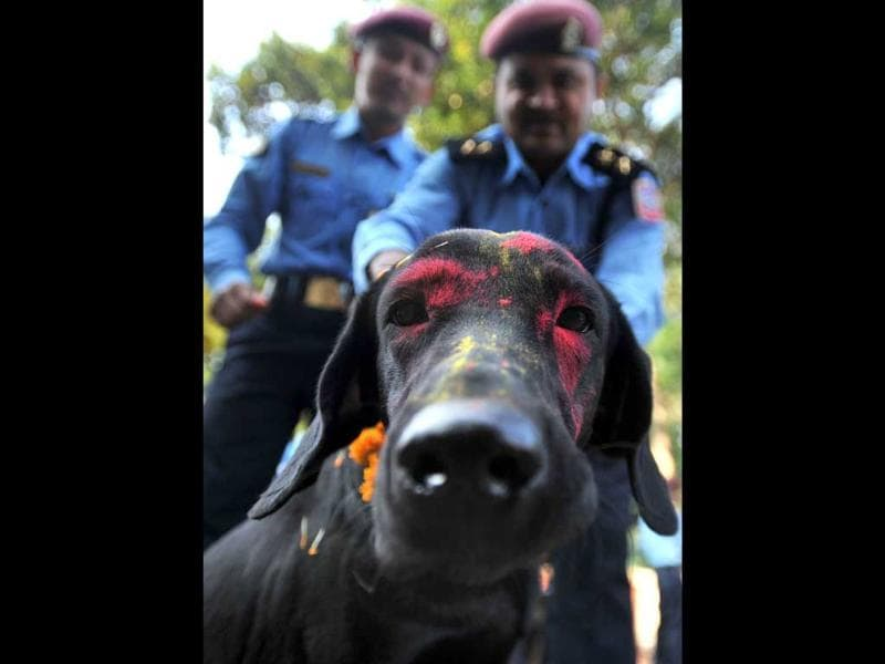 Nepalese police officer garlands a dog after applying vermillion to foreheads and placing marigold garlands around their necks on the ocassion of the Tihar festival in Kathmandu.