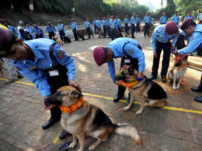 Nepalese police officers garland dogs after applying vermillion to their foreheads and placing marigold garlands around their necks on the occasion of the Tihar festival in Kathmandu.