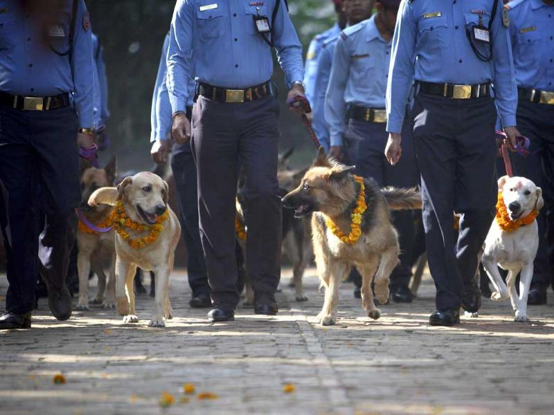 Police dogs are escorted back by the police officers after the dog festival as part of celebrations of Tihar at Nepal Police Academy in Kathmandu.