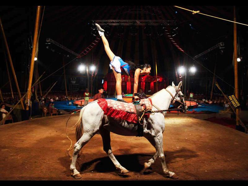 A performer balances herself on the back of a horse during a show at the Rambo Circus in Mumbai.