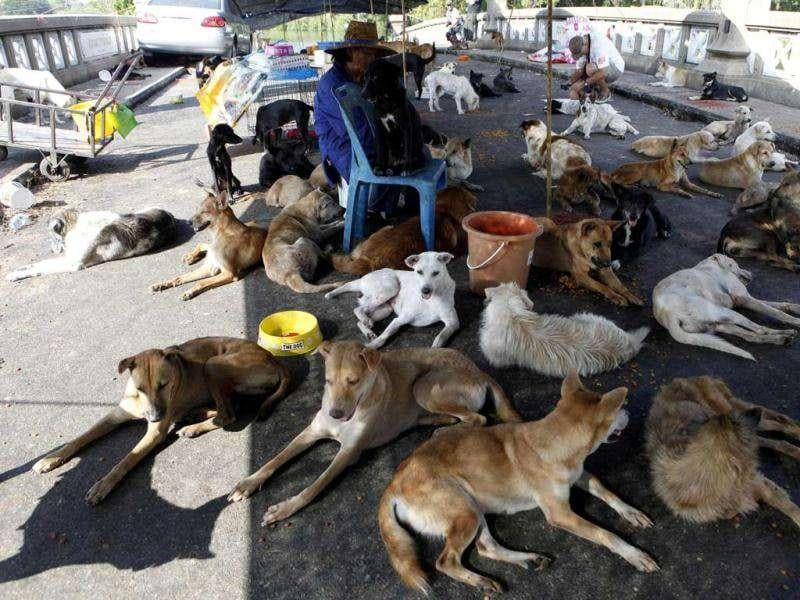 A woman sits among abandoned dogs as floodwater hit Nakhon Pathom province, on the outskirts of Bangkok.