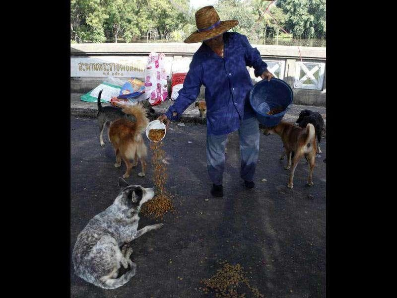 A woman prepares animal feed for abandoned dogs as floodwater hit Nakhon Pathom province, on the outskirts of Bangkok.