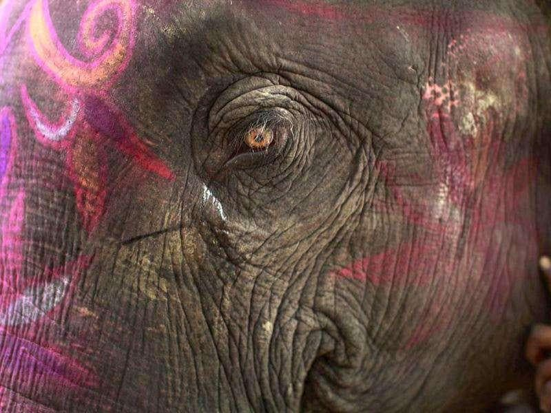 An elephant is seen painted in decorative colors at the Sonepur Fair near Patna.