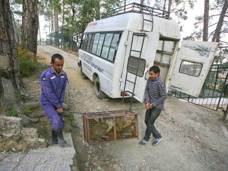 An attendant and a trapper carry caught monkeys to the monkey rescue centre run by forest and wildlife department Tutikandi in Shimla. (Reuters)