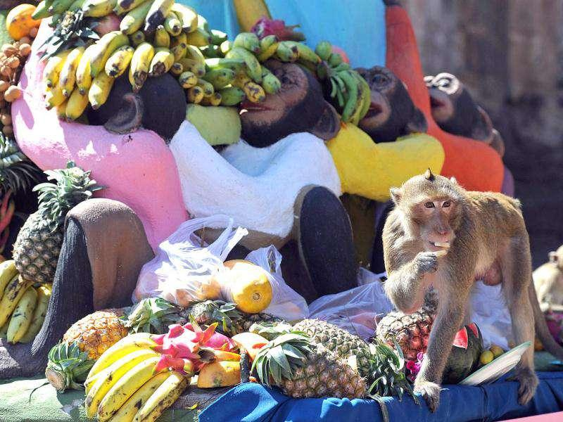 A monkey eats fruit in front of an ancient temple during the annual