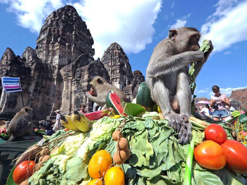 Monkeys eat fruit in front of an ancient temple during the annual
