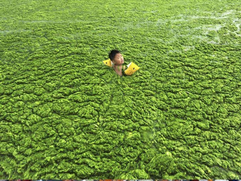 A child swims in the algae-filled coastline of Qingdao, Shandong province of China. (Reuters)