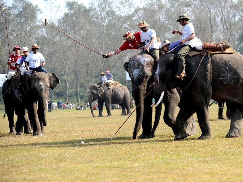 Elephant polo players from Tiger Tops Tigresses (C back) and EFG Switzerland (L) vie for the ball during the 30th International Elephant Polo Competition at Meghauly in Chitwan District, some 200 kms from Kathmandu.