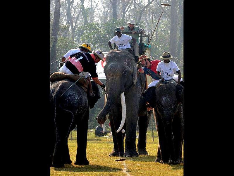 Elephant polo players from Chinggis Khaan (L) and Rusty Kukris (R) vie for the ball during the 30th International Elephant Polo Competition at Meghauly in Chitwan District, some 200 kms from Kathmandu.