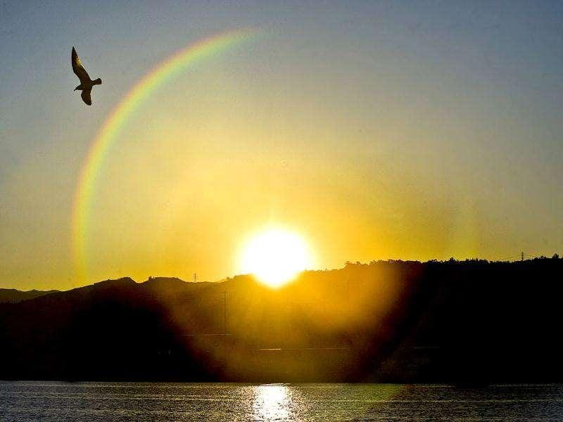 A seagull soars past as the rising sun reflects into Santa Ana River Lakes in Anaheim, California. The rainbow effect of the image is caused by light refracting in a telephoto lens pointed directly into the bright light of the sun.