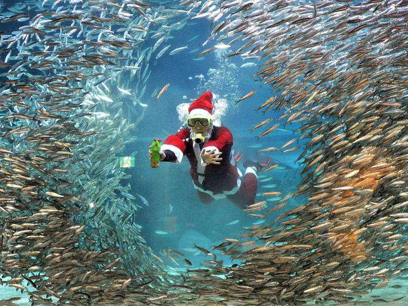 A professional diver wearing a Santa Claus outfit swims in a tank during an event at the Coex Aquarium in Seoul.