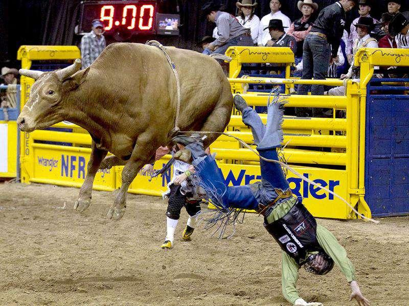 Tyler Willis of Wheatland, Wyo. is thrown from the bull after hanging on for the required eight seconds during the bull riding competition in the sixth go-round of the National Finals Rodeo in Las Vegas.