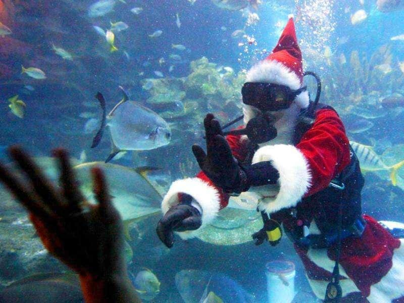A diver, dressed as Santa Claus, feeds a ray during a show at the Aquaria KLCC underwater park in Kuala Lumpur. Despite having a Muslim majority dominated by ethnic Malays, a large percentage of ethnic minorities in Malaysia celebrate Christmas as a religious holiday. AFP PHOTO/Mohd Rasfan