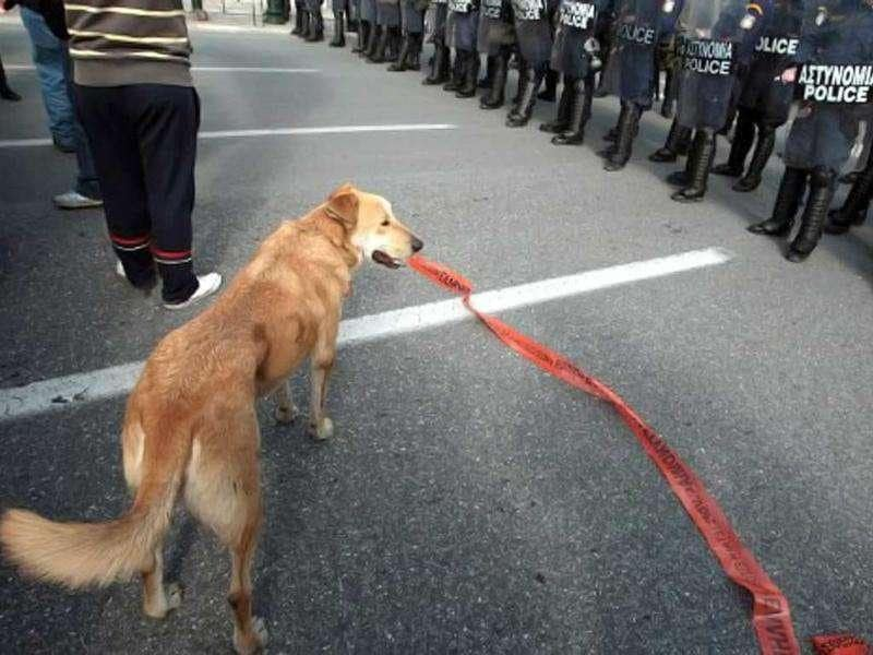 A dog stands between protesters and a police cordon blocking the way to the Greek parliament during a demonstration in Athens on February 14, 2009 in solidarity to the protestors arrested during the December riots in Greece. AFP Photo/Louisa Gouliamaki