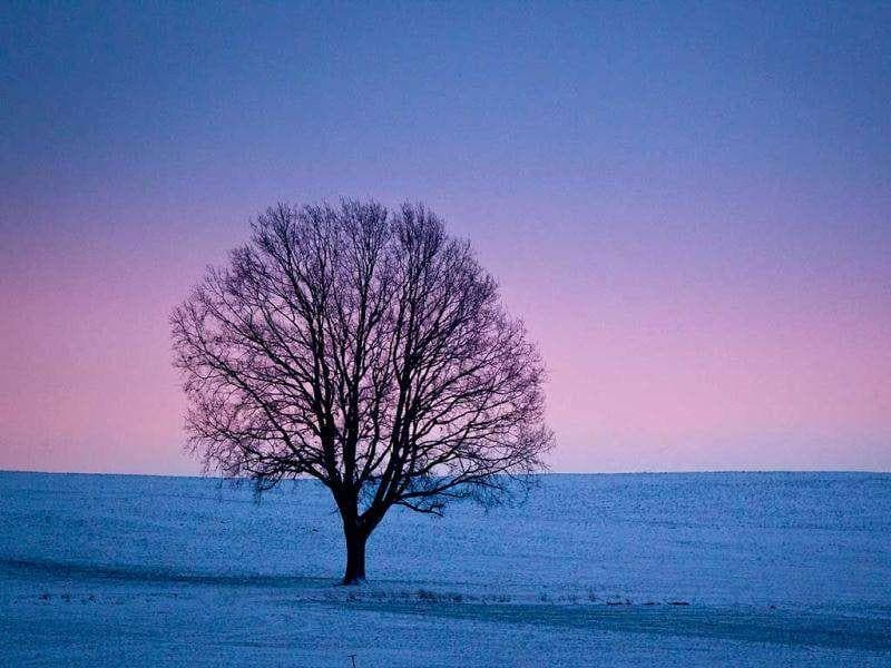 A tree is photographed on a snow-covered field during sunrise near Memmingen, southern Germany. AP Photo