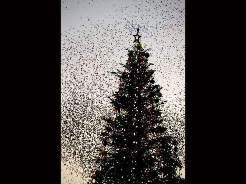Flocks of starlings fly over a Christmas decoration as night falls in Rome. Thousands of starlings gather each fall and winter in the Italian capital, putting aerial displays over the city. AFP/Gabriel Bouys