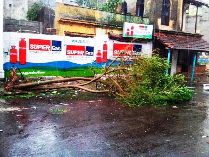A tree is uprooted following Cyclone Thane in Puducherry on Friday. The cyclone played a havoc in Puducherry causing extensive damage to buildings, roads, shops and establishments. PTI Photo