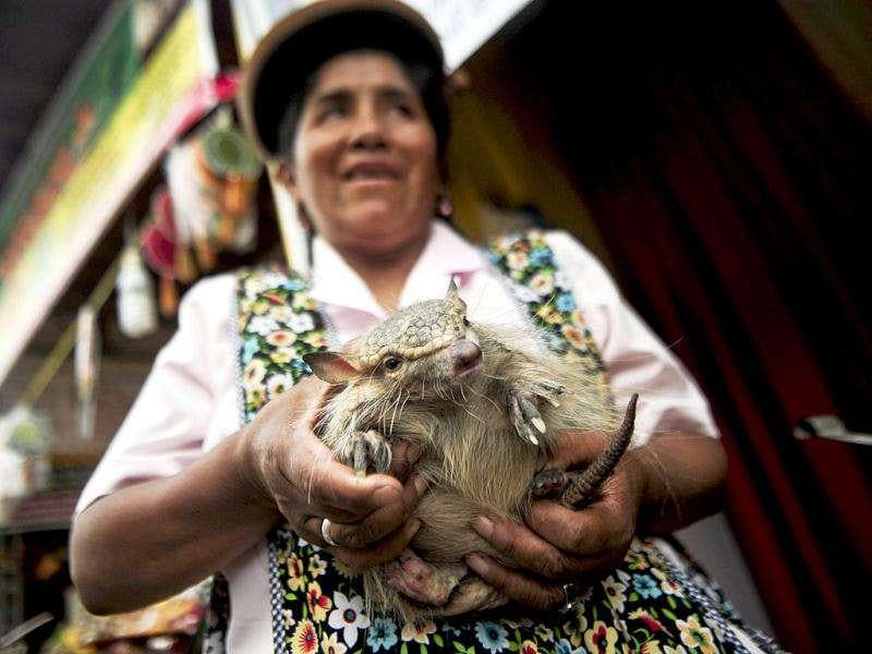 An Andean woman carries an armadillo to be used in a ritual of predictions at the Wishes Market in Lima. AFP