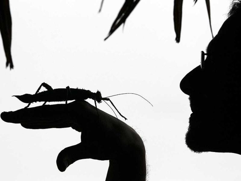 Keeper Dave Clarke is seen in silhouette as he holds a Jungle Nymph stick insect at London Zoo. AP Photo