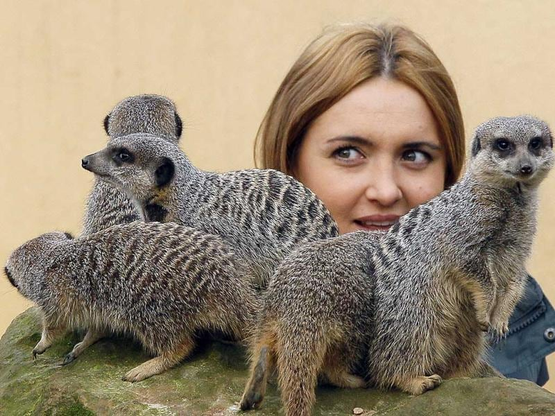Keeper Caroline Westlake counts the Meerkats at London Zoo. AP Photo