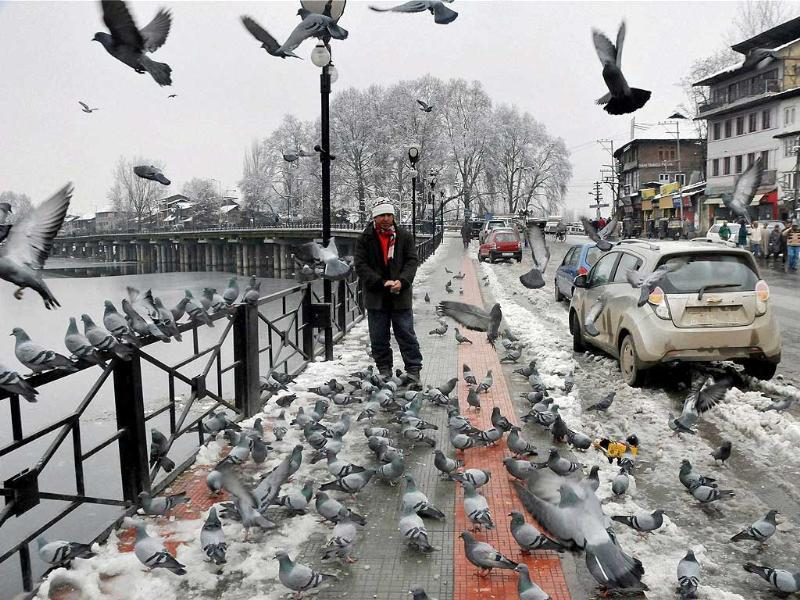A Kashmiri feeds pigeons near snow-covered road and Chinar trees in Srinagar. PTI Photo