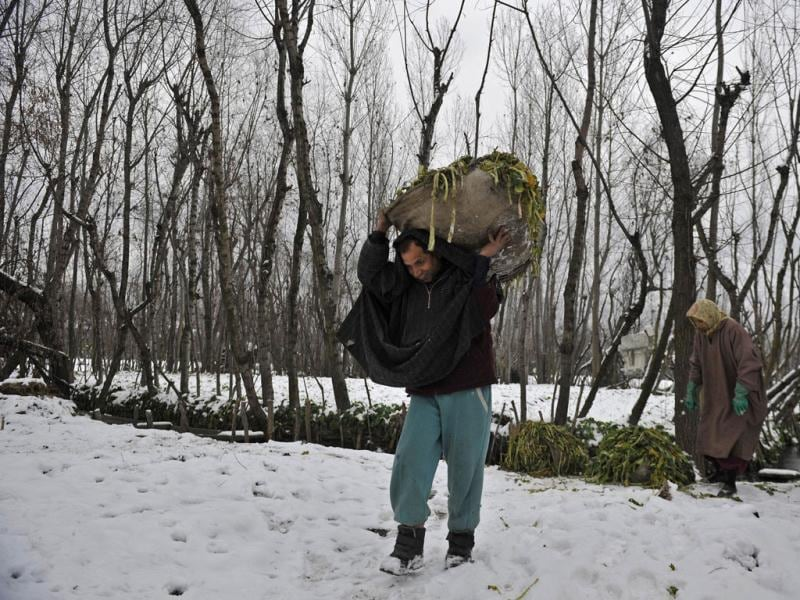 A man carries vegetables from his snow-covered farm in Srinagar. AFP Photo/Tauseef Mustafa