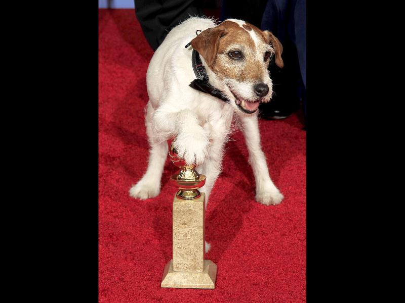 Uggie the dog featured in the film The Artist, which won the best comedy or musical motion picture, places his paw on the award at the 69th annual Golden Globe Awards in Beverly Hills, California. Reuters