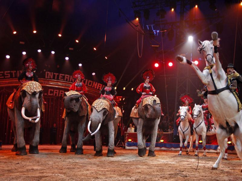 The German Casselly family performs with African elephants and horses during the opening ceremony of the 36th International Circus Festival of Monte Carlo in Monaco. AFP Photo/Eric Gaillard, Pool