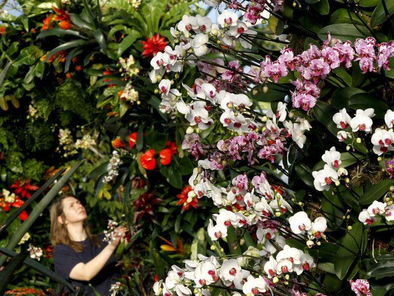 Plants are arranged in preparation for the Tropical Extravaganza festival at Kew Gardens in London. AP/Kirsty Wigglesworth
