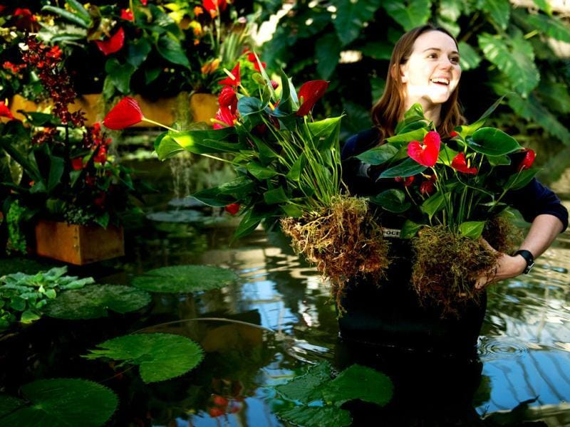 Apprentice horticulturalist Kirsty Watson carries plants at the Kew Garden's Tropical Extravaganza 2012 festival in south London. AFP/Leon Neal
