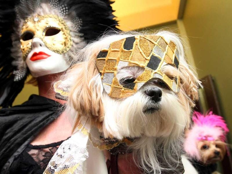 Candice Ball, left, and her dog Toshi, a Mi-Ki, arrive at the 2012 Pre-Westminster Fashion Show in New York. AP/Tina Fineberg