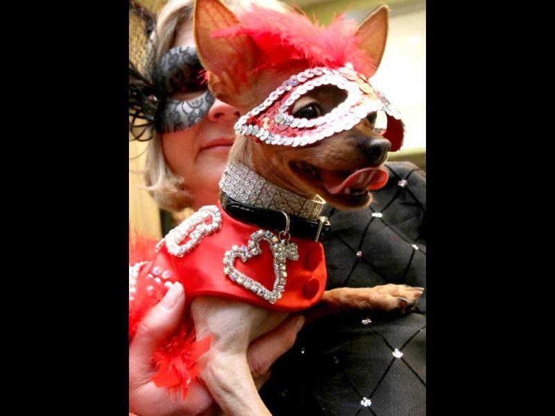 Dressed for the occasion, Phyllis Ludwig, of Lavon, Texas, poses for a photograph with her chihuahua Dixie Belle which is a nursing home volunteer dog. AP/Tina Fineberg