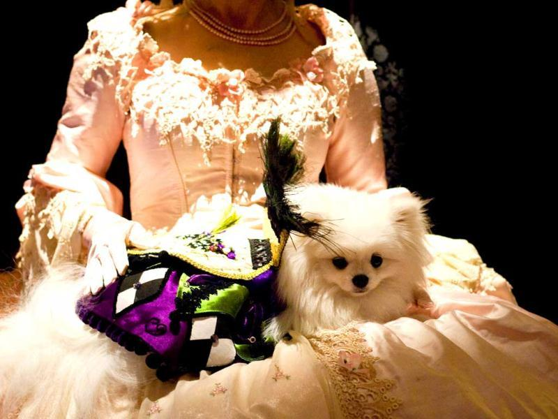 Sophia, white Pomeranian from Mississippi, sits on Jena Oddo's lap ahead of next week's Westminster Kennel Club Dog Show in New York City. AFP/Michael Nagle