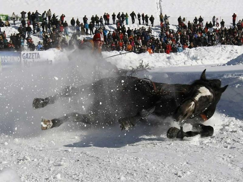 A horse falls down as it pulls a skier during the