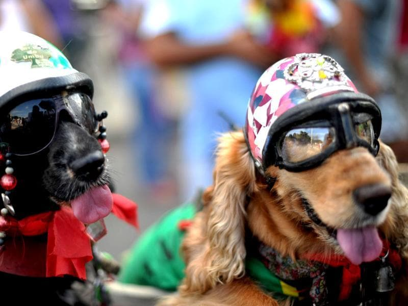 Dogs dressed with motorcycle helmets take part in the animal carnival parade at Copacabana beach in Rio de Janeiro, Brazil. AFP photo/Christophe Simon
