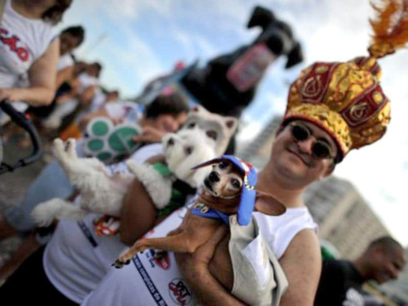 A dog dressed in a fancy costume with its owner at the animal carnival parade at Copacabana beach in Rio de Janeiro, Brazil. AFP photo/Christophe Simon