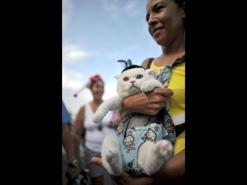 A cat dressed in a fancy costume with its owner at the animal carnival parade at Copacabana beach in Rio de Janeiro, Brazil. AFP photo/Christophe Simon