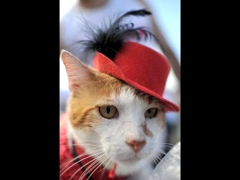 A cat sporting a fancy red hat takes part in the animal carnival parade at Copacabana beach in Rio de Janeiro, Brazil. AFP photo/Christophe Simon