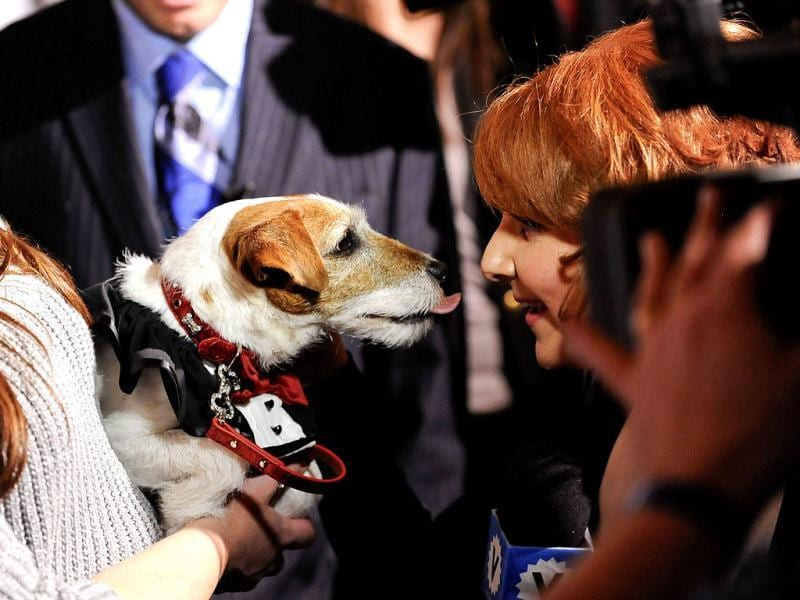 Uggie from The Artist gives a reporter a kiss during the event. (Reuters Photo)