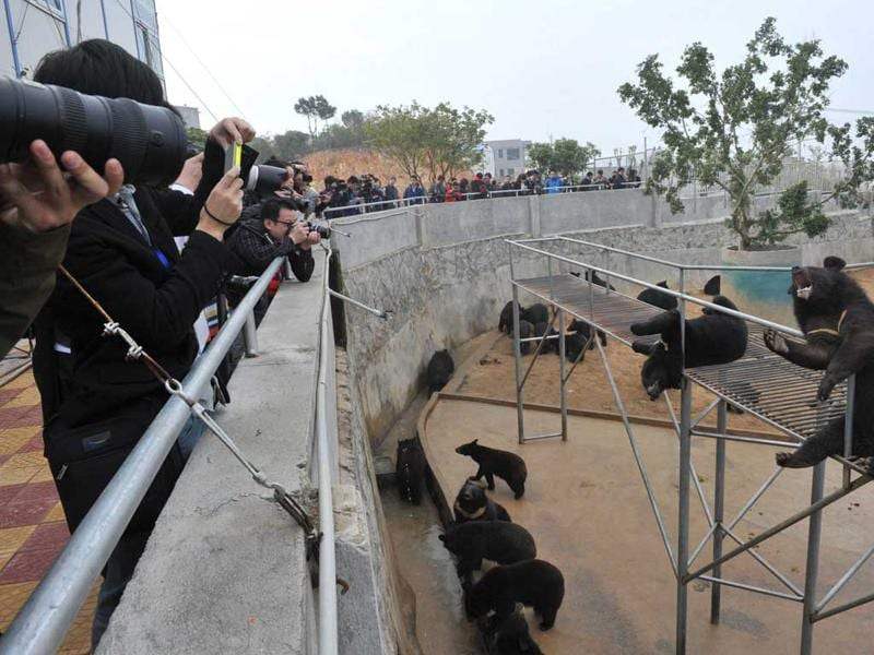 Bears are seen at one of the traditional Chinese medicine company Guizhentang's controversial bear bile farms in Hui'an, southeast China's Fujian province. AFP Photo