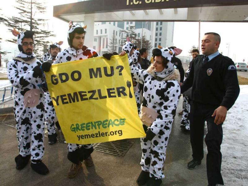 Greenpeace activists display a banner which translates as 'don't eat genetically modified food' as they wear cow costumes during a demonstration outside the ministry of agriculture in Ankara. AFP Photo/Adem Altan